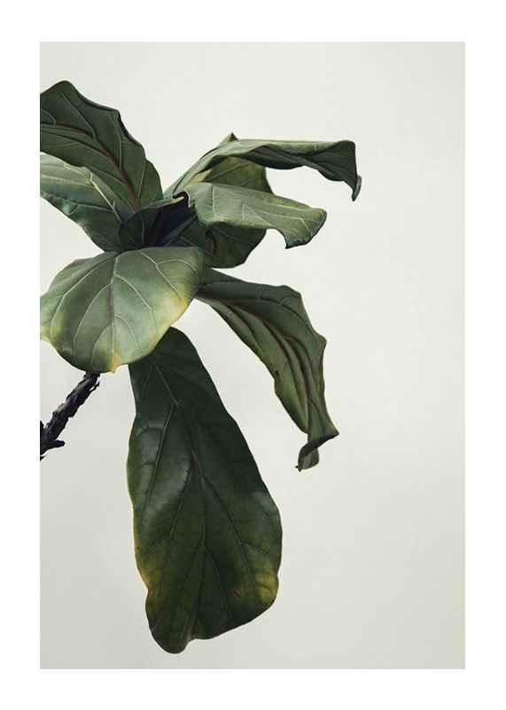 Botanical Leaves-1