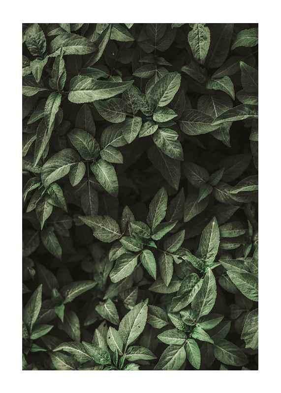 Garden Green No1-1