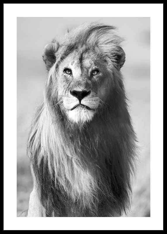 Majestic Lion-0