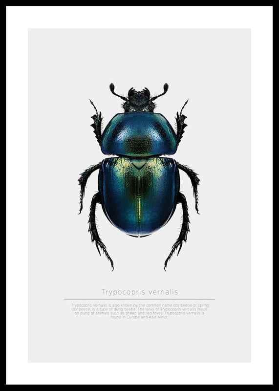 Beetle Display