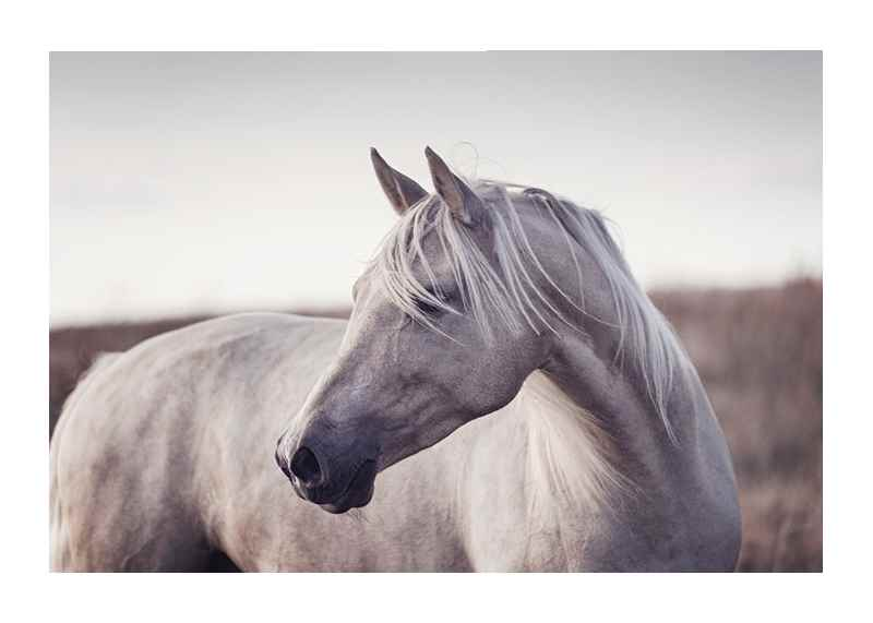 White Horse-1