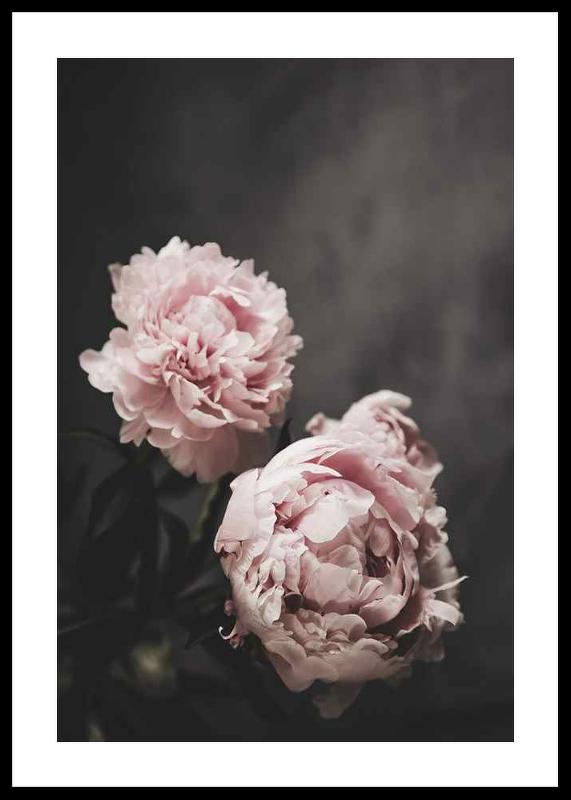 Pink peonies No2