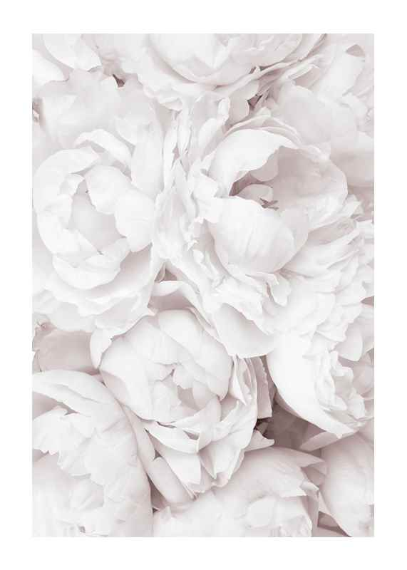 Bright Pink Roses No3-1