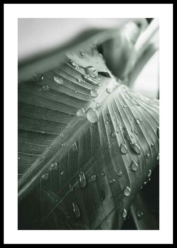 Palm Leaf Raindrops