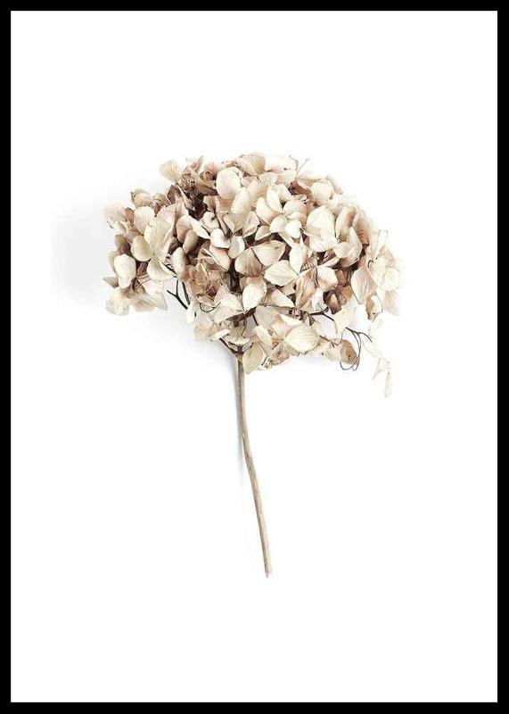 Dried Field Flower No2