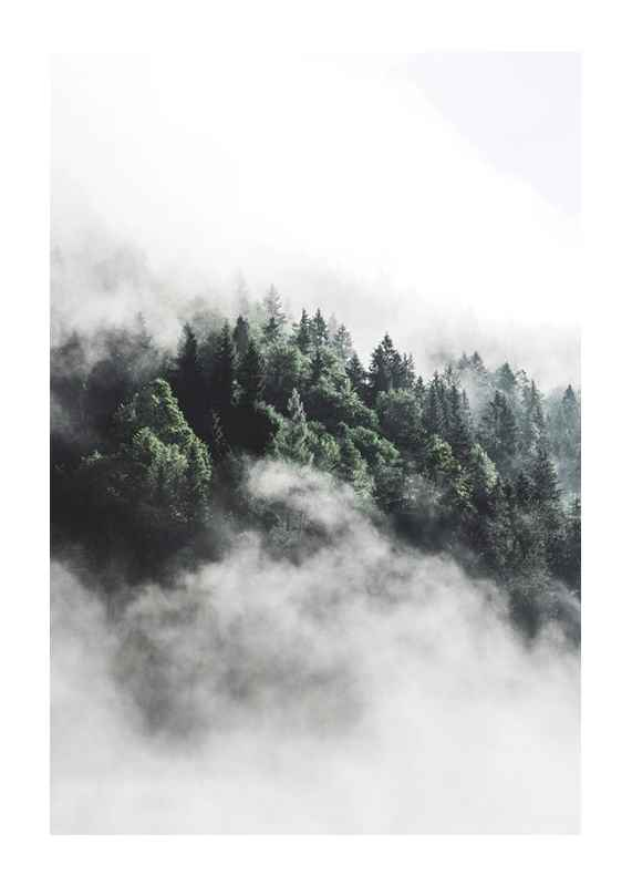Forest In Mist-1