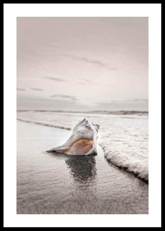 Shell On Beach-0