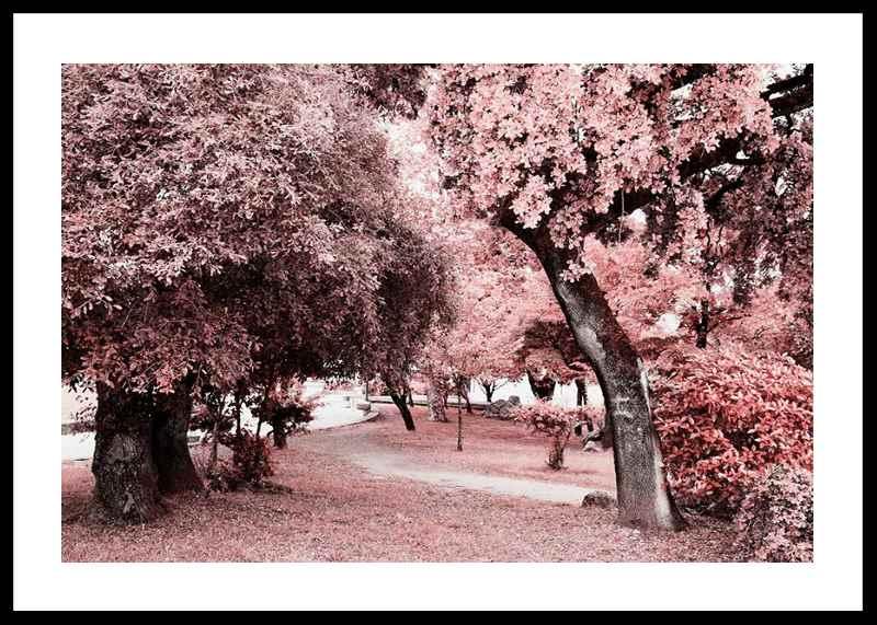 Pink Trees No1