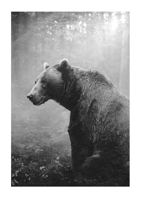 Grizzly Bear-1