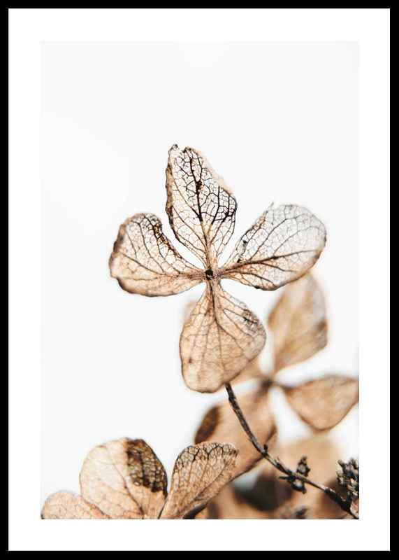 Four Leaves Plant-0