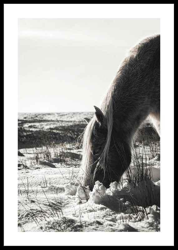 Winter Horse-0