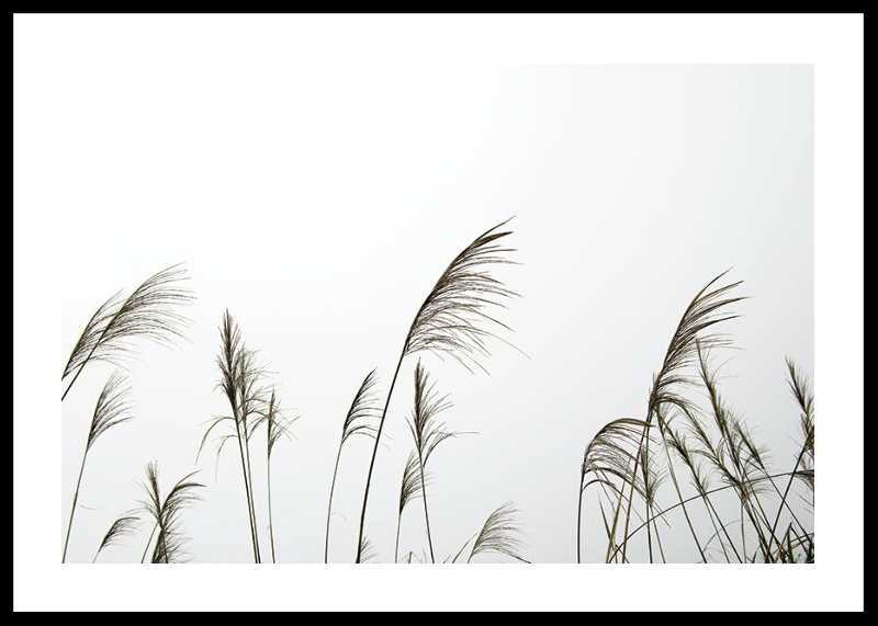 Reed Flowers-0