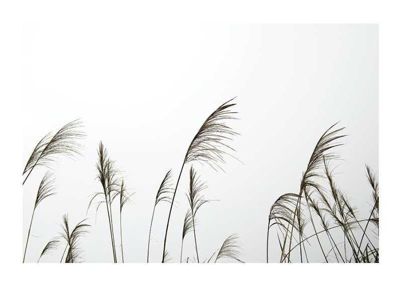 Reed Flowers-1