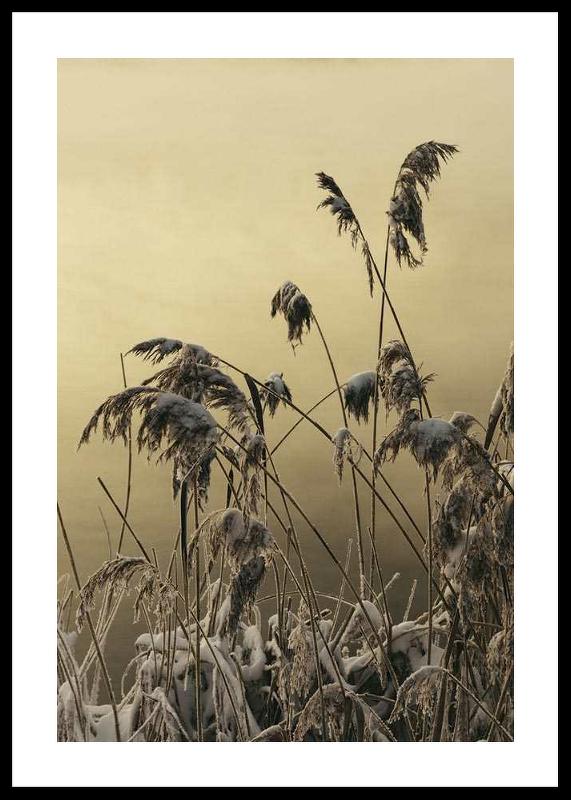 Winter Reed No2