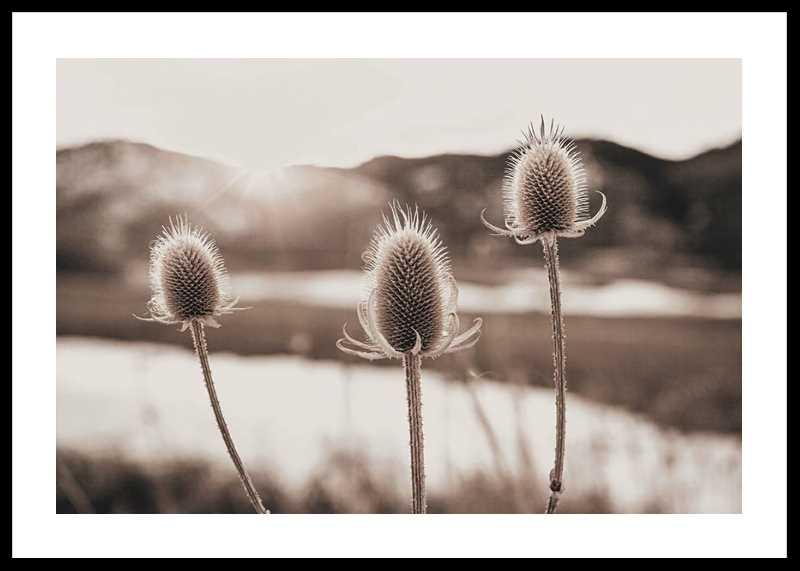 Flowers In Meadow-0