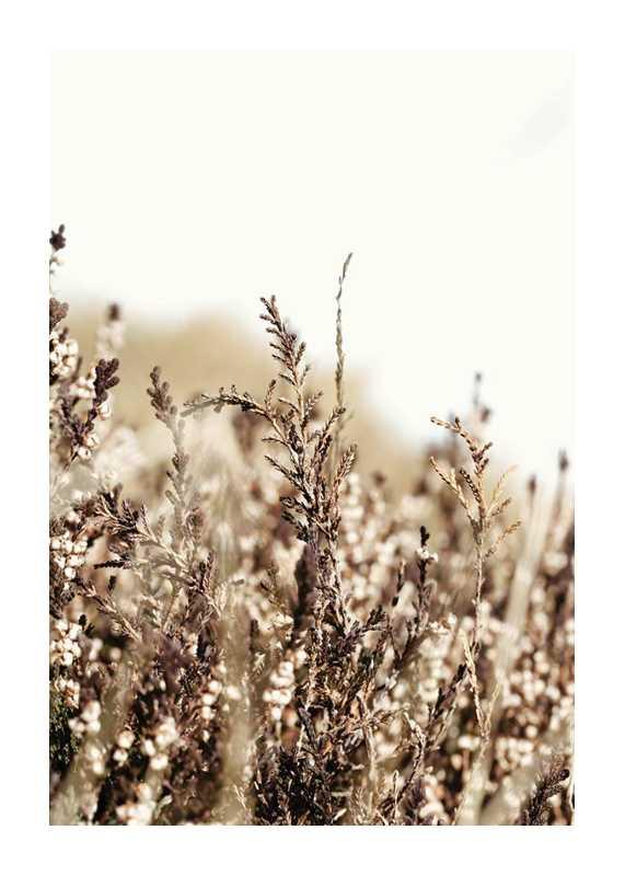 Growing Fields-1