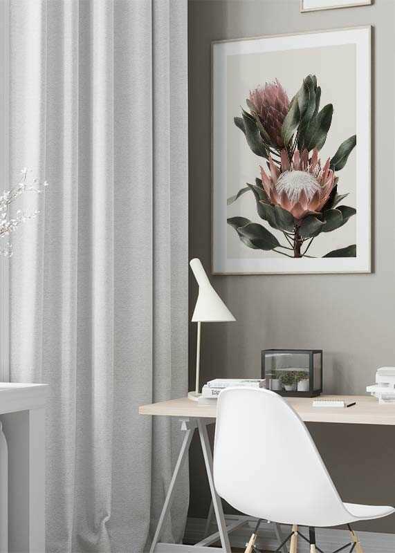 Protea Flowers-4