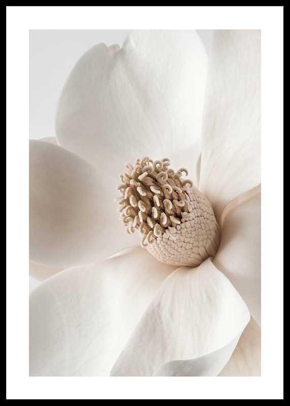 Beige Magnolia No2