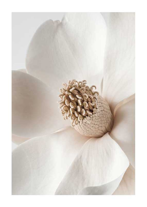 Beige Magnolia No2-1