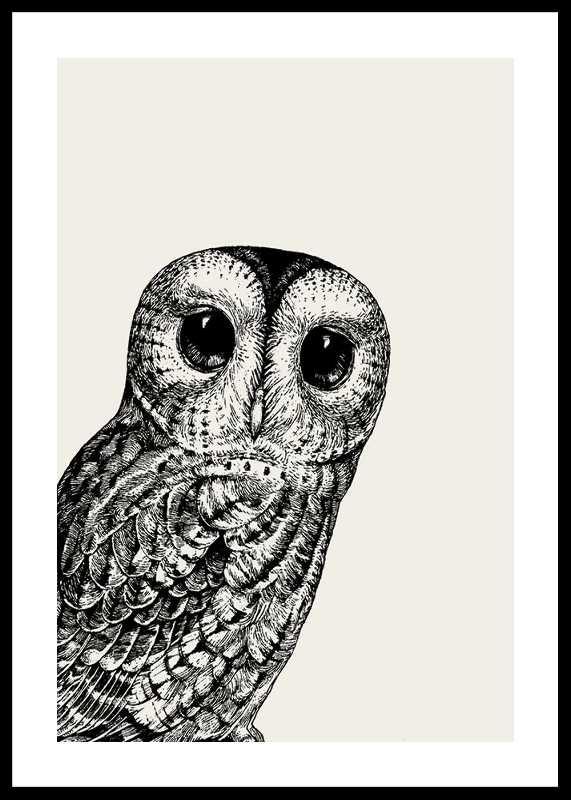 Watching owl-0
