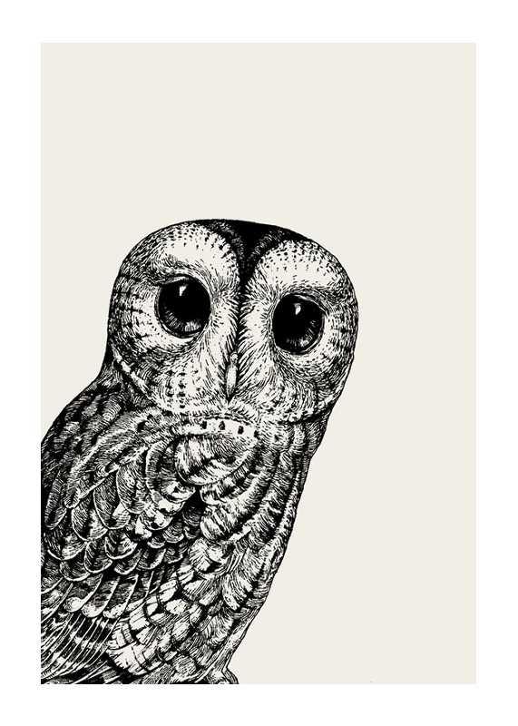 Watching owl-1